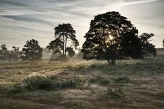 Misty landscape during sunrise in English countryside landscape Stock Photos