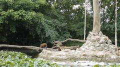 Monkeys on the animal playground zoo 2 Stock Footage