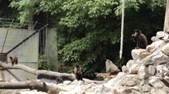 Monkeys on the animal playground zoo 6 Stock Footage