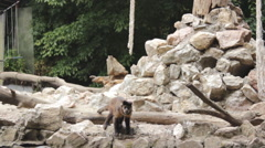 Monkeys on the animal playground zoo 7 Stock Footage