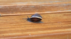 Snail crawling slowly over brown wood Stock Footage