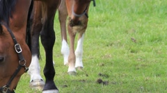 Horse foal filly and mare on green pasture - stock footage
