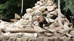 Monkeys on the animal playground zoo 9 Stock Footage