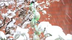 Snowfall, winter, Hazel, birdseed - stock footage