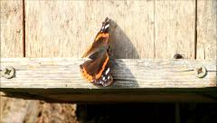 Butterfly and fly on wooden wall, copy space Arkistovideo