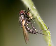 fly in nature. marco - stock photo