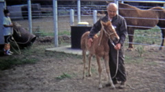 1971: Pony trainer whispers and calms ranch horses. Stock Footage