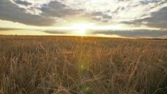 Crane shot over ripe wheat field with dramatic clouds Stock Footage