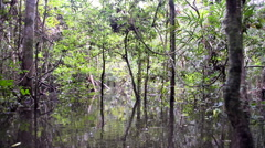 Flooded Rain Forest Stock Footage