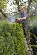 Gardener cutting a hedge from a ladder and using a petrol driven hedge cutter Stock Photos