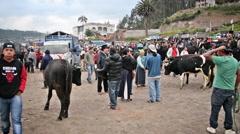 Animal Market in Otavalo, Ecuador Stock Footage