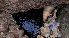 Sea cucumber under the stone - stock footage