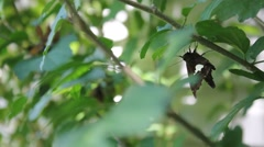 Butterfly resting in the shade of a bush Stock Footage