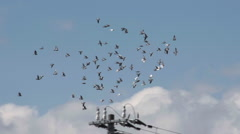 Pigeons flying in Slow Motion Stock Footage