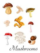 Forest edible and toxic mushrooms in cartoon style - stock illustration