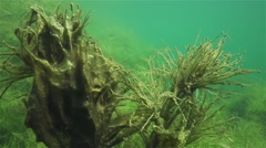 Beautiful forms of algae and silt in the lake with clear water in slow motion Stock Footage