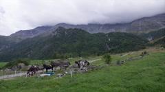 Alpine landscape at summer season Stock Footage