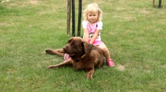 Little girl playing with a Brown Labrador retriever in spring Stock Footage