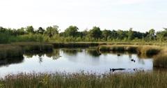 National Park Groote Peel lake with moor - stock footage