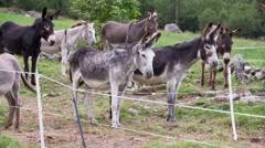Enclosed donkeys Stock Footage