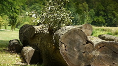 Big felled tree at a botanical garden Stock Footage