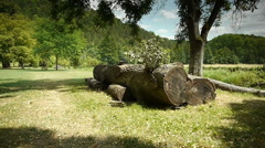 Felled tree at a botanical garden Stock Footage