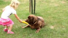 Stock Video Footage of Little girl feeding a Brown Labrador retriever with corn