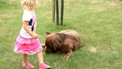 Little girl playing and Brown Labrador retriever eating corn Stock Footage