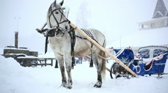 Harnessed horse in winter warm Christmas day during heavy snowfall Stock Footage