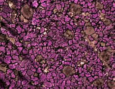 Stock Photo of pink texture