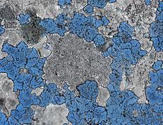 Stock Photo of blue moss