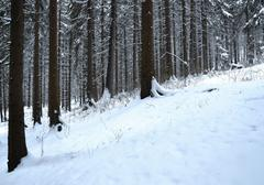 background snowy forest - stock photo