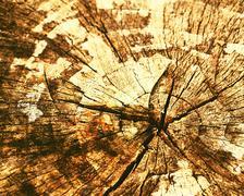 Stock Photo of old wooden stump