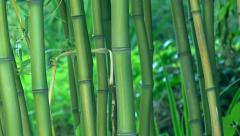 Bamboo trees as background Stock Footage