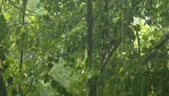Summer shower rain, heavy rainstorm in summer season Stock Footage