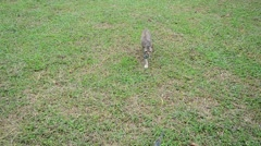 Thai domestic cats playing in garden Stock Footage