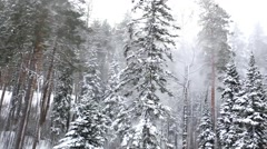 Beautiful winter forest in blizzard. Top view. Panorama Stock Footage