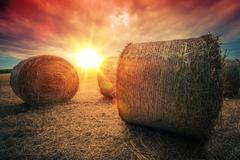 Baled Hay Rolls at Sunset. Hay Bales Countryside Landscape. Stock Photos