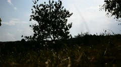 Beautiful countryside landscape, tree sihouette - stock footage