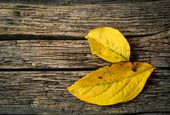 Stock Photo of yellow leaves on wood