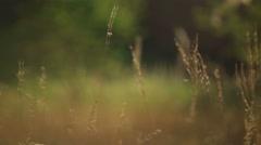 Barley field, malt, 4K video Stock Footage