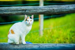 White Cat Seating on the Wood Fence Log in Switzerland. - stock photo
