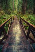 Wooden Trail Bridge in California Redwood Forest Stock Photos