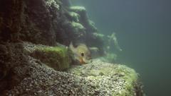 Quarry Fish Stock Photos