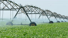 Agriculture, soy bean field watering equipment - stock footage