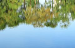 Stock Photo of Trees mirrored on rippled water surface
