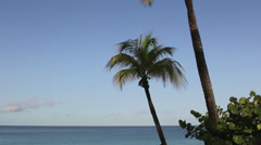 Palm trees with ocean and blue sky - stock footage