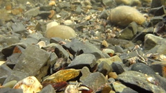 Stony seabed creatures Stock Footage