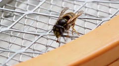 Wasp crawling on a metal grid, and then flies away. Stock Footage