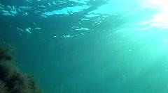 Slanting sunlight in undersea Stock Footage